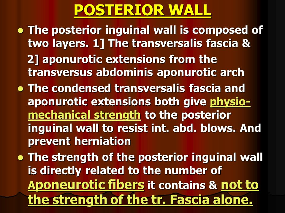 POSTERIOR WALLThe posterior inguinal wall is composed of two layers. 1] The transversalis fascia &